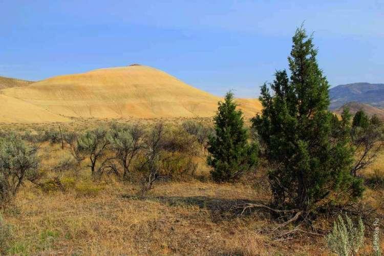 За деревьями яркий желтый холм