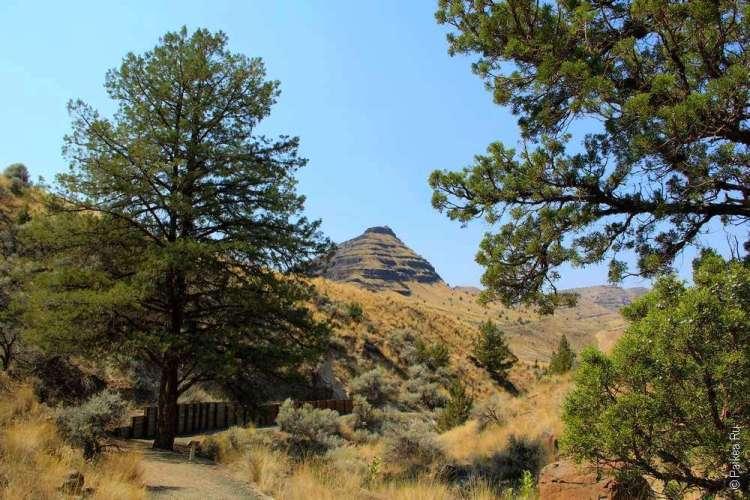 Вид на гору-пирамиду из-за сосен