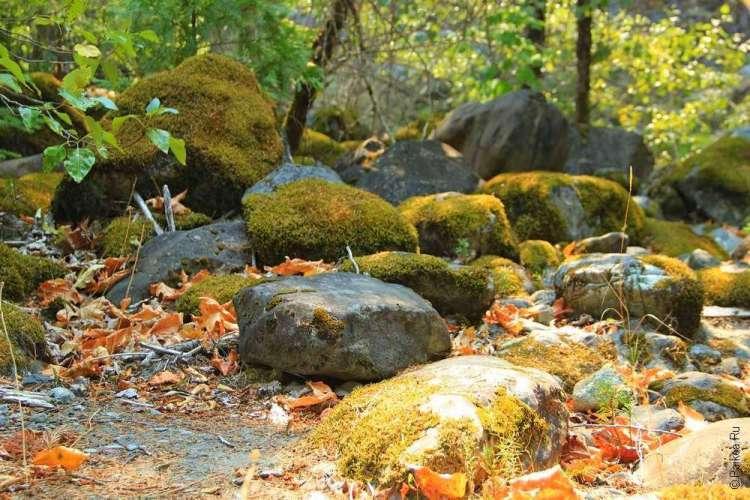Камни и листья