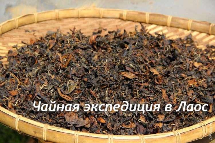 Чайная экспедиция в Лаос