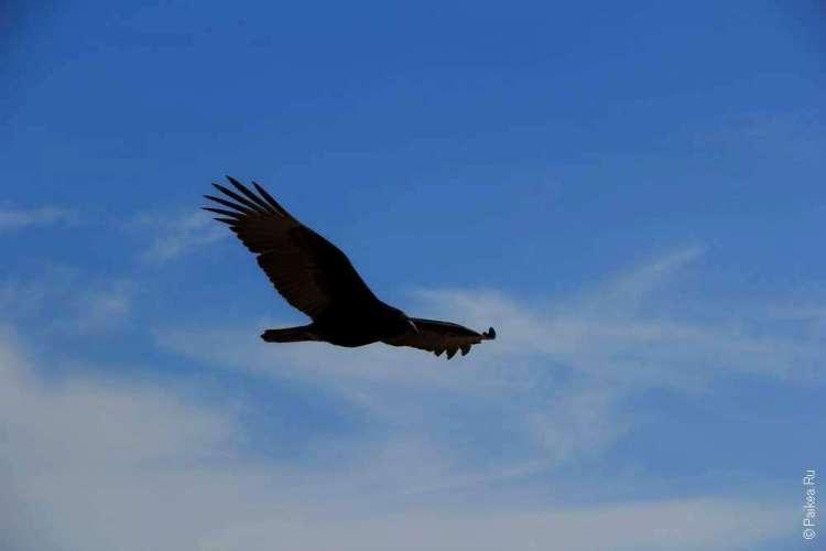 Национальный парк Бэдлендс, Южная Дакота, США - Орел в небе