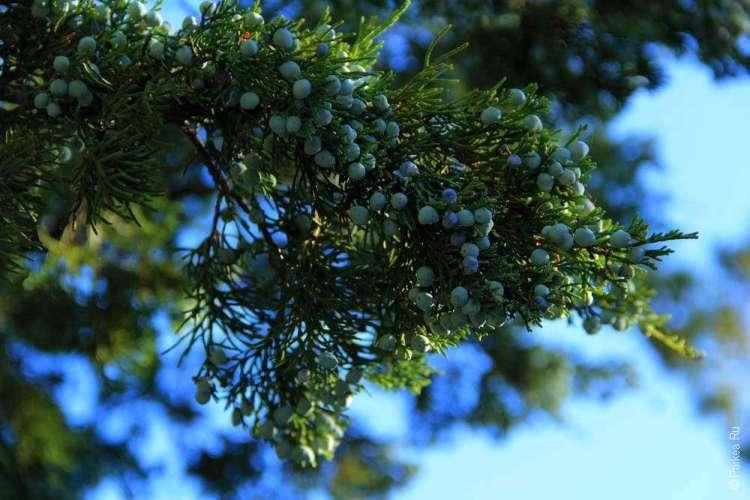 Национальный парк Бэдлендс, Южная Дакота, США 09
