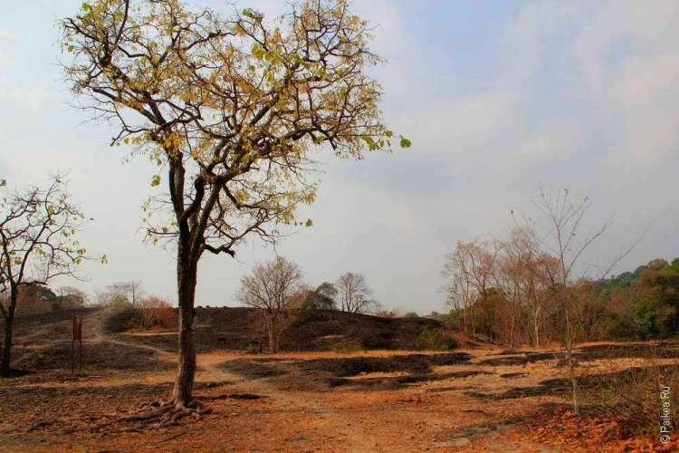 Дерево на засушливом холме
