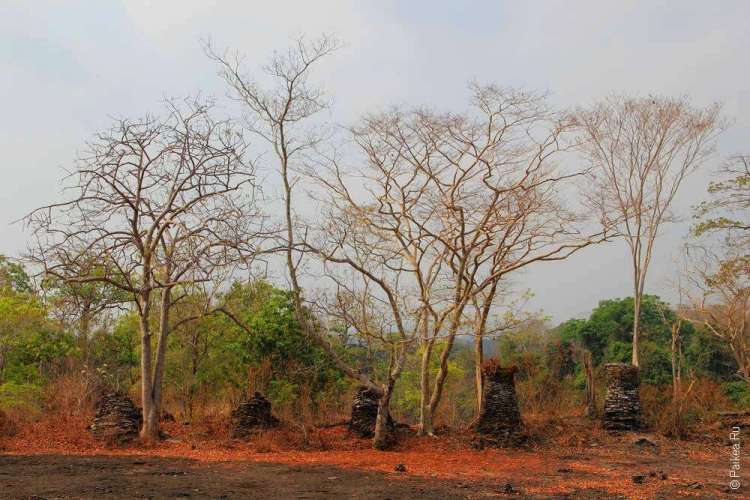 Сухие деревья и руины