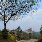 Пхаяо (Phayao)