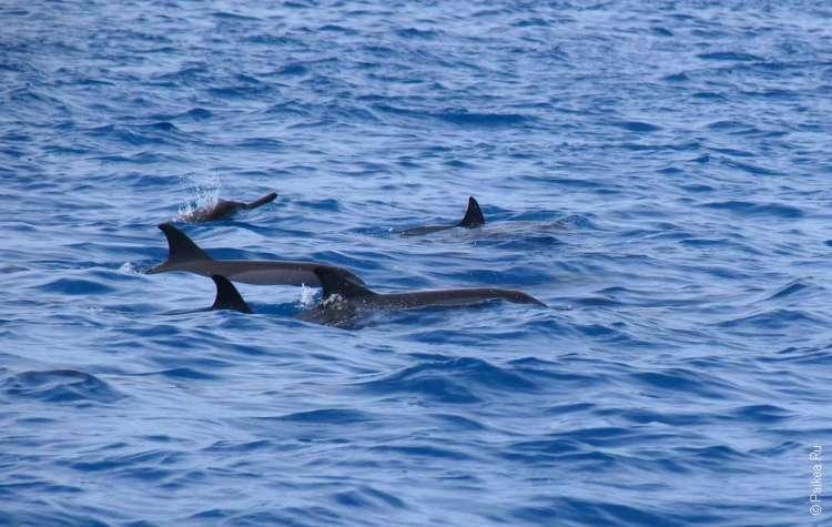 Дельфины плывут в открытом море