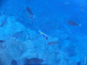 Рыбы в морской воде