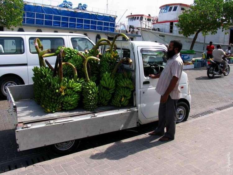 Мальдивы флора и фауна