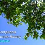 Вааву атолл: острова Фулидхоо, Тинадхоо, Фелидхоо, Кейоду и Ракиду