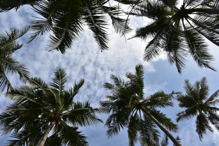 мальдивы пальмы