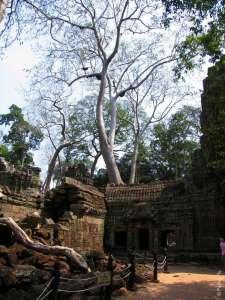 Руины храма Та Пром и деревья