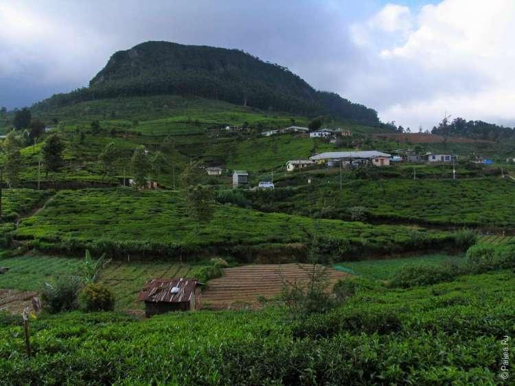 Чайная фабрика Педро Шри-Ланка