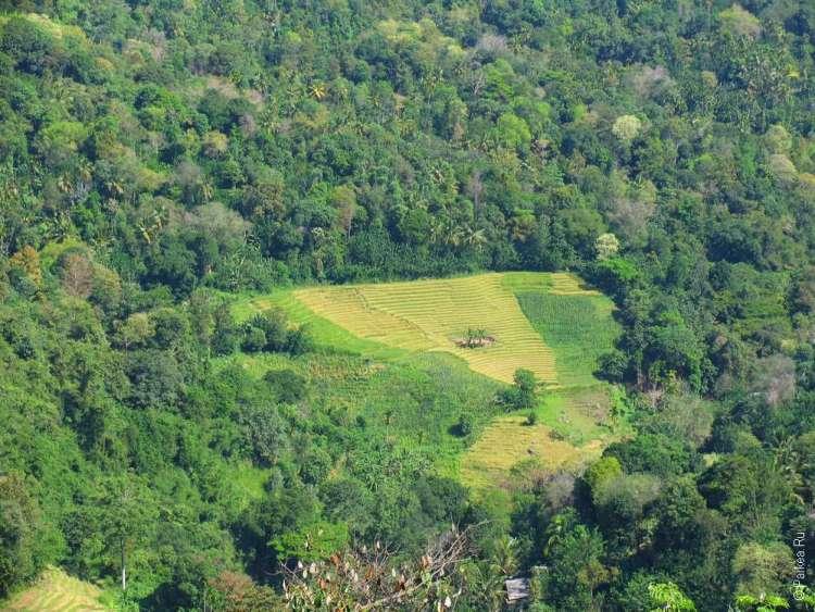 Окрестности города Бадулла в Шри-Ланке