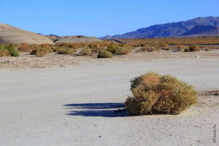 Пустыня Мохаве находится в штате Калифорния США