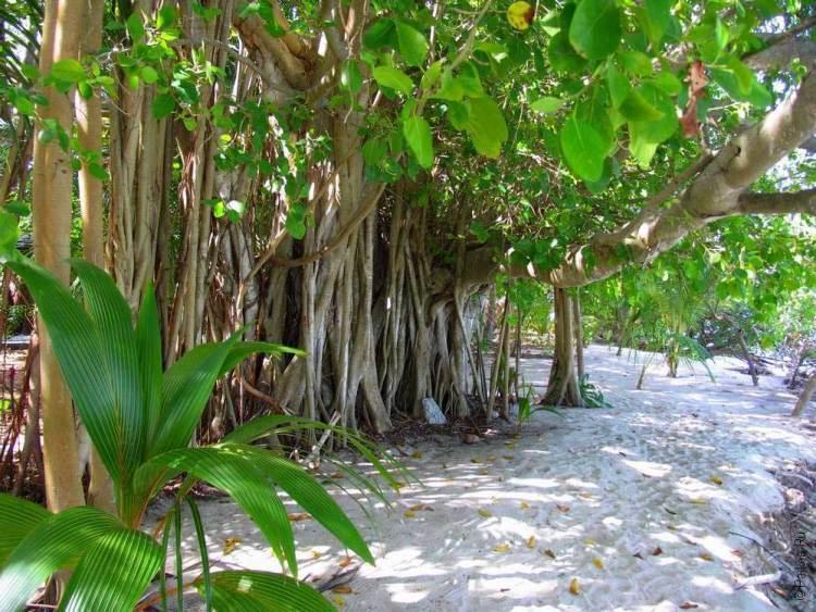 Экологический туризм на Мальдивах