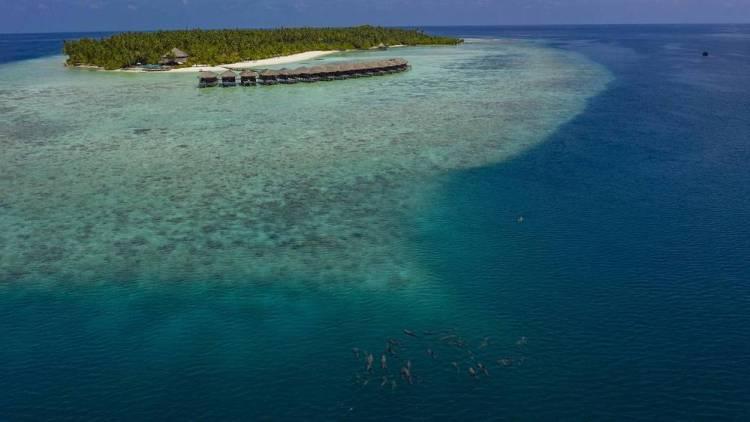 Мальдивы отели с домашним рифом filitheyo