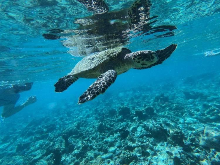 Мальдивы домашний риф