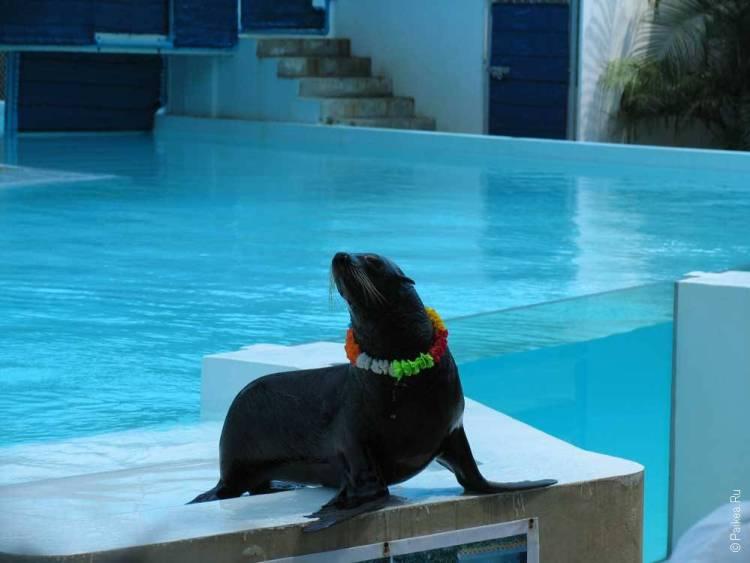 достопримечательности таиланда самуи аквариум