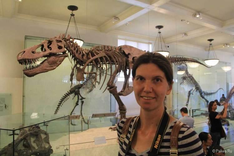 Музей естественной истории нью-йорк