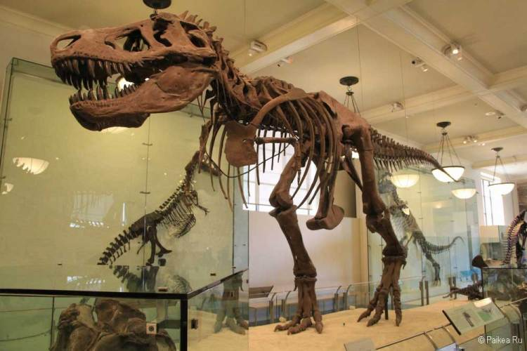Достопримечательности Нью-Йорка что посмотреть динозавры