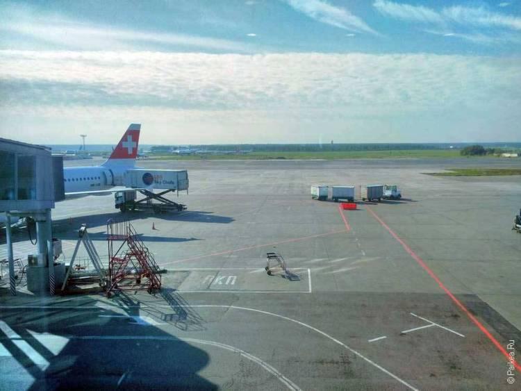свисс аэропорт домодедово