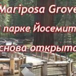 Марипоса Гроув Йосемити (Mariposa Grove Yosemite)