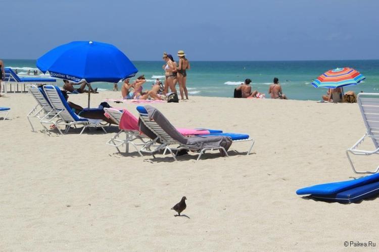 Отдых во Флориде - наш лучший маршрут по пляжам Флориды 5