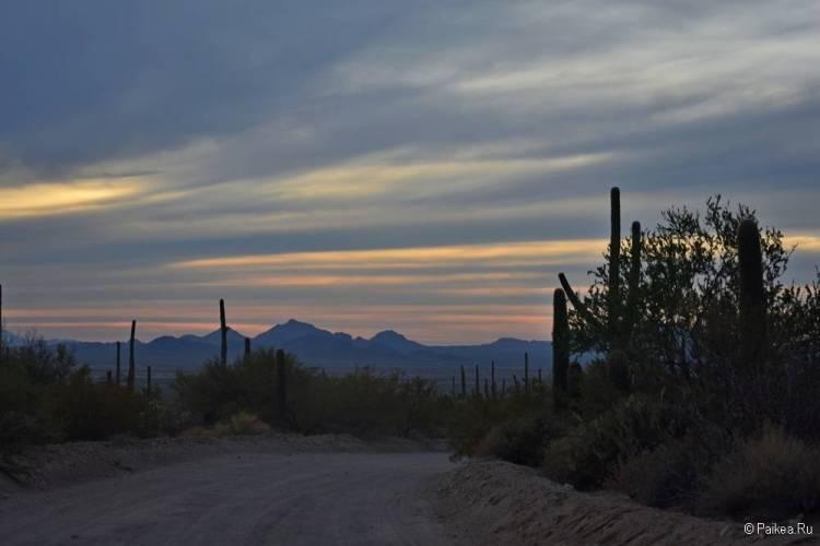 Сагуаро парк (Saguaro National Park) 01