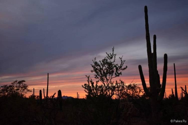 Сагуаро парк (Saguaro National Park) 08