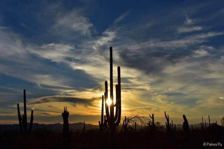 Сагуаро парк (Saguaro National Park) 24
