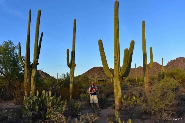 Сагуаро парк (Saguaro National Park) 26