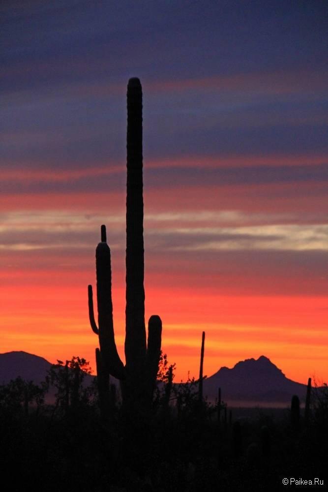Сагуаро парк (Saguaro National Park) 32