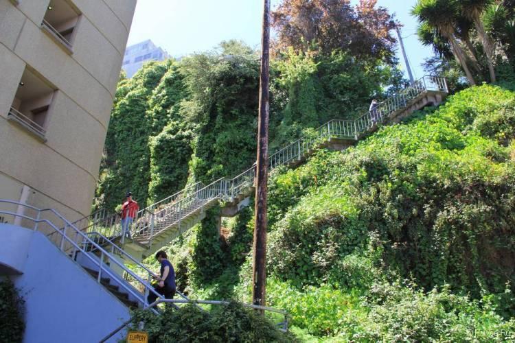 Улица со ступеньками Гринвич-Степс в Сан-Франциско 25