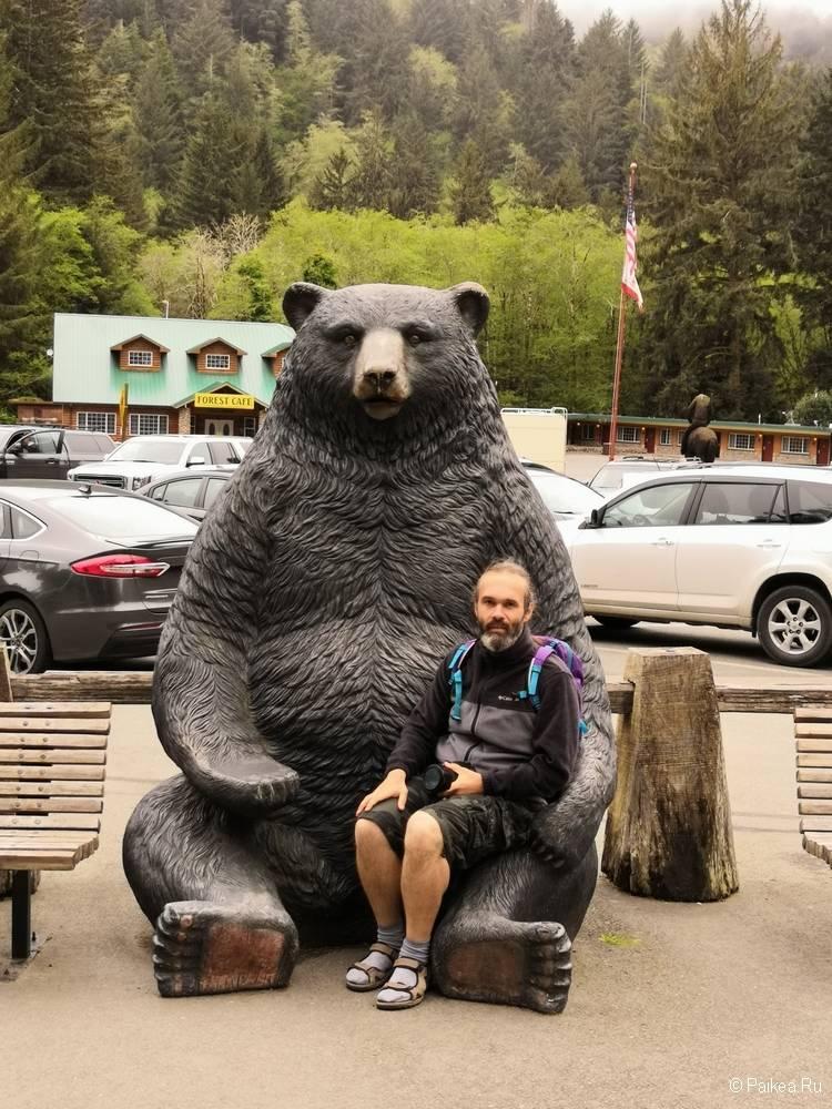 медведь северная калифорния