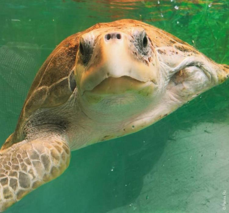 морская черепаха на мальдивах