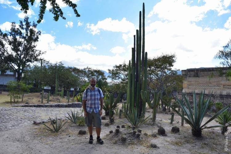 путешествие в мексику самостоятельно митла 15