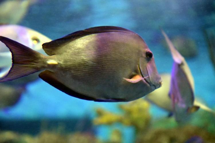парк джон пеннекамп корал риф / john pennekamp coral reef state park 23