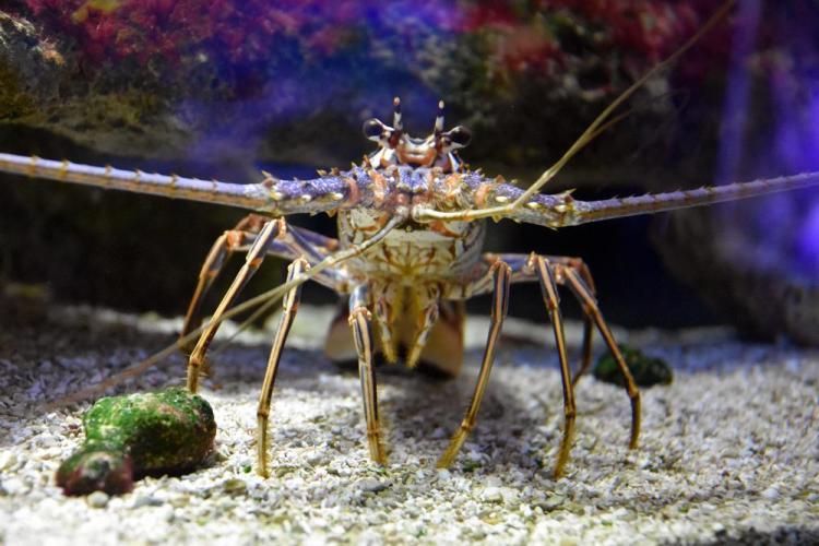 парк джон пеннекамп корал риф / john pennekamp coral reef state park 25