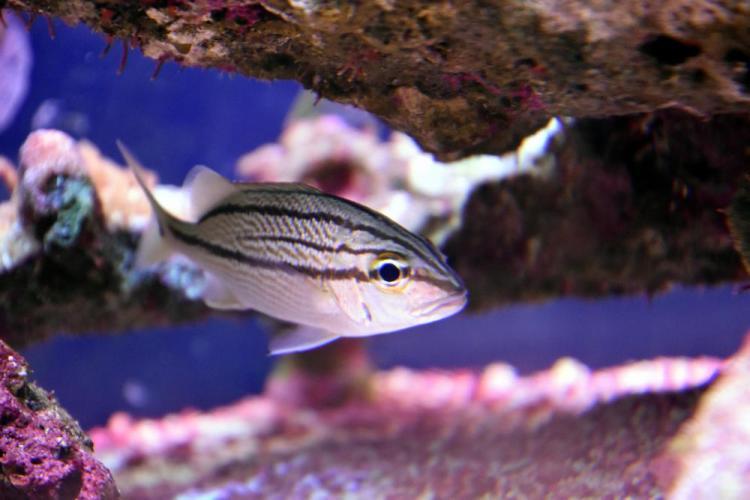парк джон пеннекамп корал риф / john pennekamp coral reef state park 27