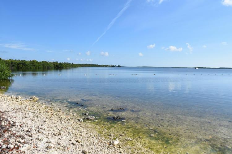 парк джон пеннекамп корал риф / john pennekamp coral reef state park 48