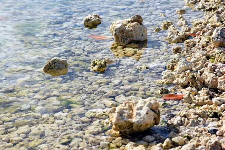 парк джон пеннекамп корал риф / john pennekamp coral reef state park 51