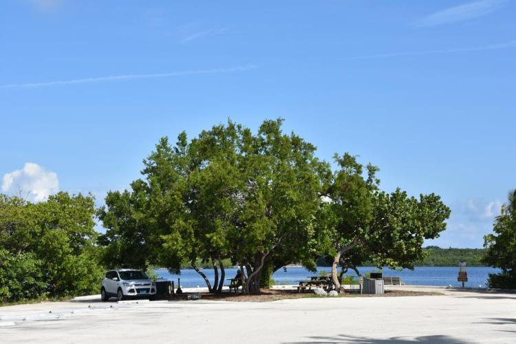 парк джон пеннекамп корал риф / john pennekamp coral reef state park 82