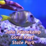 парк джон пеннекамп корал риф / john pennekamp coral reef state park