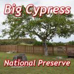 биг сайпресс (big cypress)