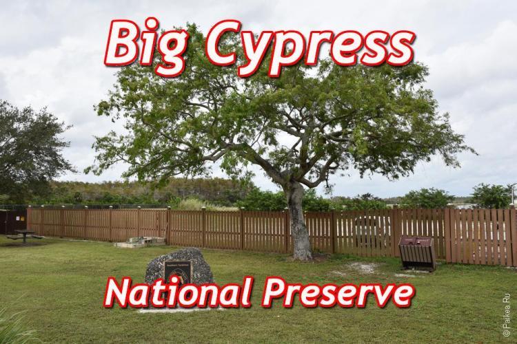 big cypress это