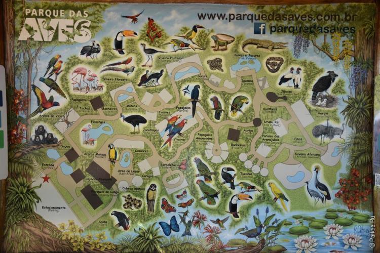 парк птиц фос-ду-игуасу бразилия / parque das aves 03