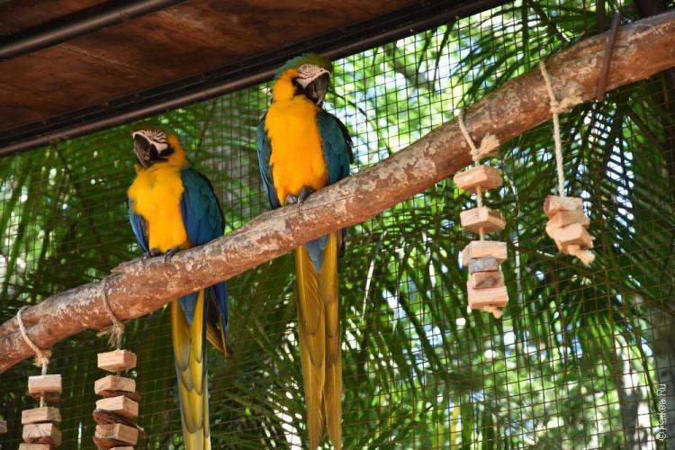 парк птиц фос-ду-игуасу бразилия / parque das aves 21