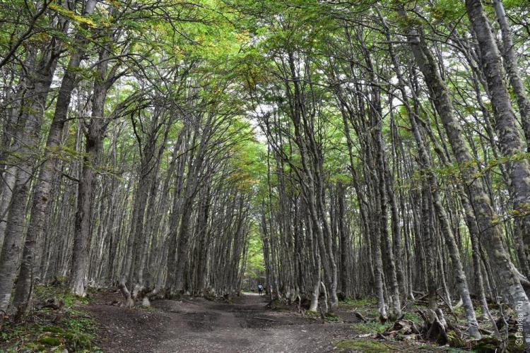 лагуна эсмеральда лес