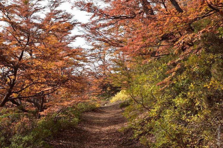 осень в барилоче