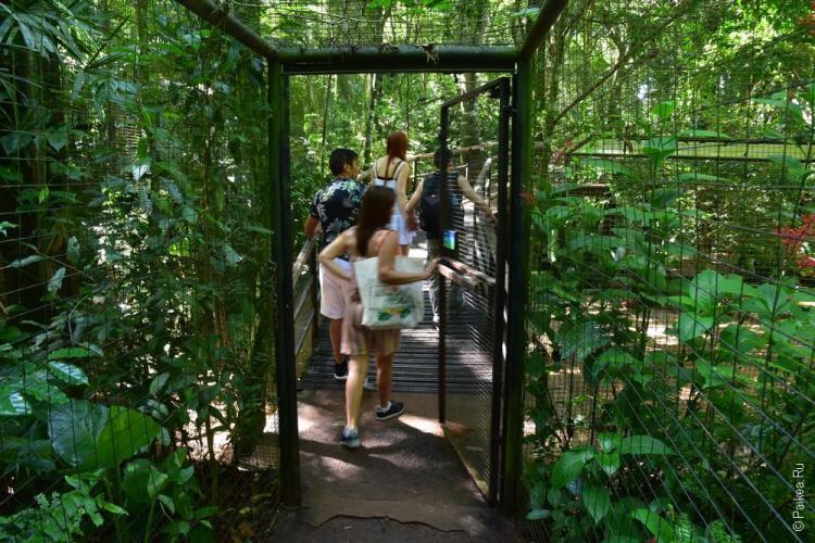 парк птиц бразилия (parque das aves) 11